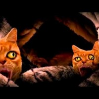 Video: Run The Jewels | Meowpurrdy ft. Lil Bub, Maceo & Delonte